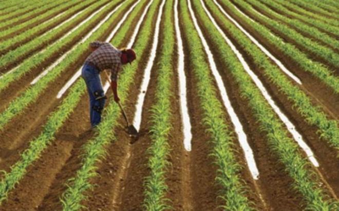 Струмичките земјоделци мотиката ja менуваат со печалба