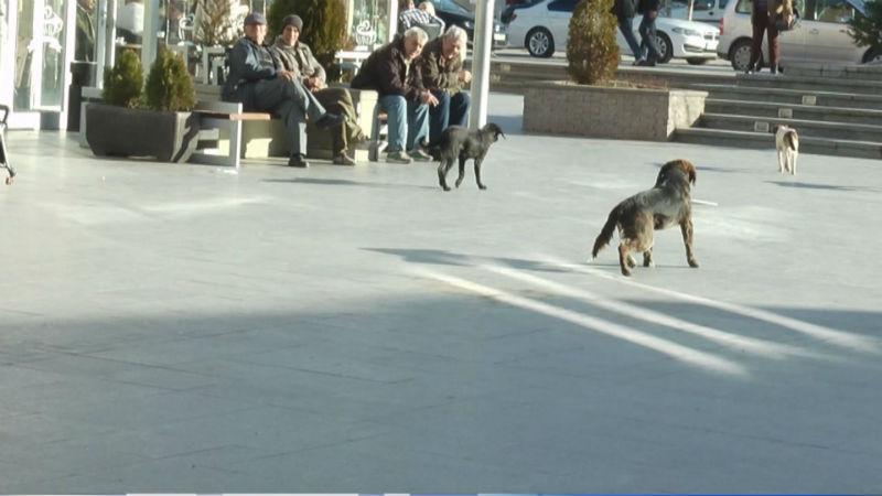 Ако ве касне куче скитник  ви следува оштета од Град Скопје