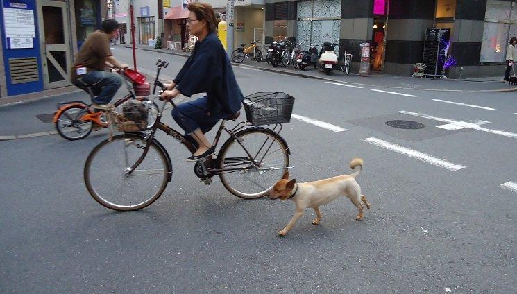 Казна од 50 евра ако возите велосипед и водите куче со себе
