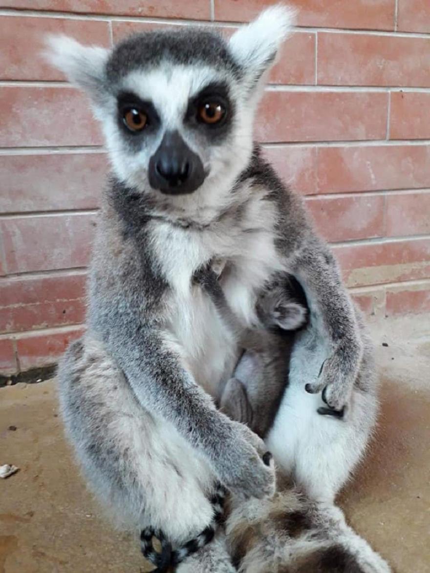 Зоолошката градина доби нови жители (ФОТО)