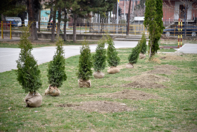 Шилегов: Ќе се засадат 1.200 дрвја во сите скопски општини
